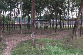 Cần bán đất Bình Dương, Chánh Phú Hoà, đã chuyển công năng XD- SX 5500m2, giá tốt trên thị trường