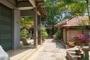 Cho thuê quán cà phê sân vườn tại xã Bình Hưng, huyện Bình Chánh, giá 7 triệu/tháng