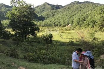 Bán đất rừng sản xuất giáp cao tốc Hòa Lạc Hòa Bình đoạn Yên Trung, Thạch Thất, Hà Nội