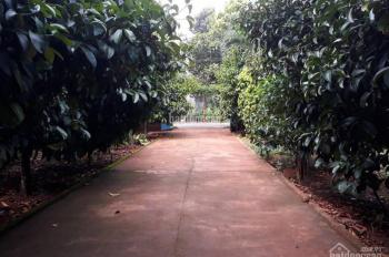 Cần bán gấp nhà vườn 25m mặt tiền đường Lê Hồng Phong (135 triệu/m ngang), thị trấn Ngãi Giao