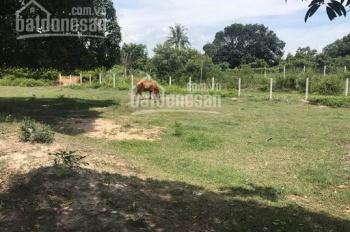 Bán đất nông nghiệp gần Quốc Lộ 1, xã Cam Hòa, huyện Cam Lâm, tỉnh Khánh Hòa