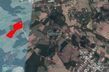 Bán trang trại 4,2 ha đang trồng dừa và bưởi hết diện tích đất