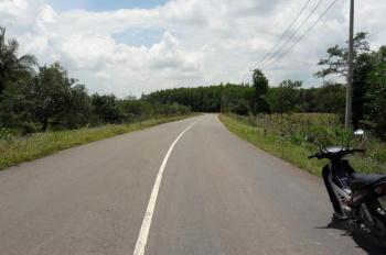 Cần bán đất gấp huyện Cẩm Mỹ, Đồng Nai. Sổ hồng chính chủ