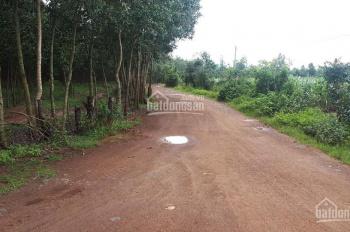 Bán gần 8 mẫu đất Xuân Hòa, Xuân Lộc, Đồng Nai, giá chỉ 5,5 tỷ, LH 0939362818