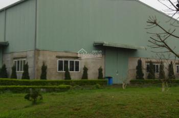Công ty cổ phần Coma 18, cho thuê gấp kho xưởng KCN Thanh Oai, DT 600m2, 1000m2, 1500m2