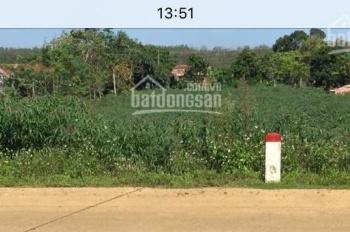 Cần tiền bán gấp đất nông nghiệp - đang lên đất thổ cư LH:0985302794