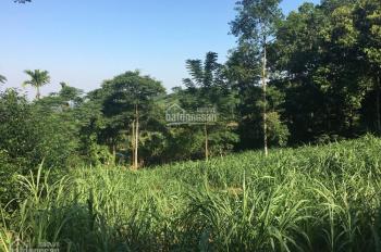 Cần bán DT 4500m2 đất ở, tại xã Yên Bài, huyện Ba Vì, TP Hà Nội, giá 195 triệu/1 sào