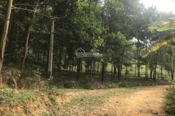 Bán gấp giá rẻ lô đất 3,2ha tại xã Cao Răm, huyện Lương Sơn, tỉnh Hòa Bình