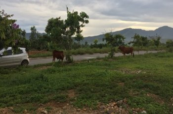 Cần bán đất thổ cư, đất vườn (đã có sổ đỏ), xã Tiến Xuân (gần Villa), Thạch Thất, Hà Nội