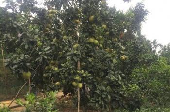 Cần bán đất dự án trang trại nhà vườn, thuộc xã Hòa Thạch, huyện Quốc Oai, TP Hà Nội