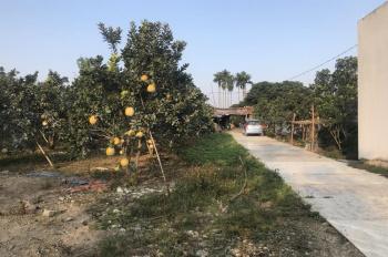 Cần bán gấp mảnh đất 5300m2, view đẹp đã có vườn cây ăn quả lâu năm tại Đông Xuân, Quốc Oai