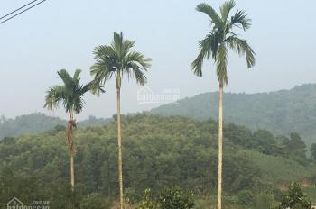 Cần bán 5.5ha đất ở, làm trang trại nghỉ dưỡng, homestay, resort, xã Ba Vì, huyện Ba Vì, TP Hà Nội