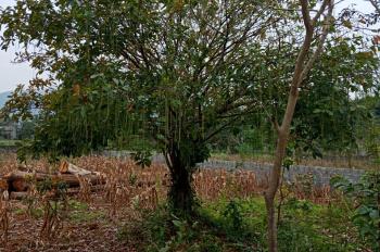 Chính chủ cần chuyển nhượng đất sổ đỏ đầy đủ gần sân golf Skylake Hàn Quốc, Lương Sơn, Hòa Bình