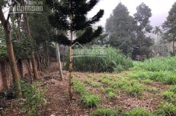 Cần bán 1300m2 đất trang trại nhà vườn tại Suối Ngọc, Tiến Xuân, Thạch Thất, giá 1,6 tỷ
