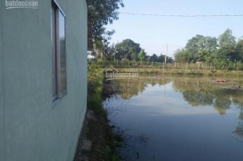 Cho thuê dài hạn nhà và đất 9300m2 (trung tâm xã Vĩnh Thạnh, Lấp Vò, Đồng Tháp)