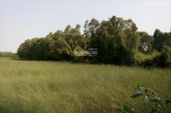 Bán gần 3 mẫu đất huyện Tân Phước, cách KCN Long Giang khoảng 700m