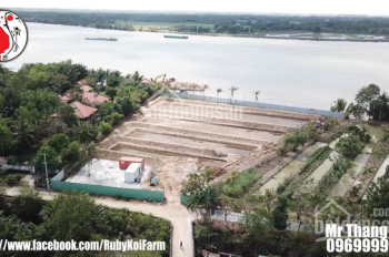 Đất nhà vườn mặt tiền sông Sài Gòn, mặt tiền đường Long Phước, Quận 9