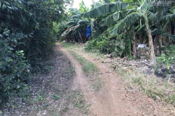 Đất Gia Kiệm 120tr/sào, gần khu di tích Thanh Bình