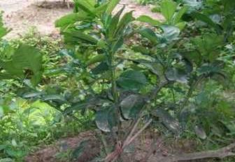 Bán vườn 4610m2 trồng Bưởi Da Xanh, Mít siêu sớm tại Bảo Quang, Long Khánh, ĐN