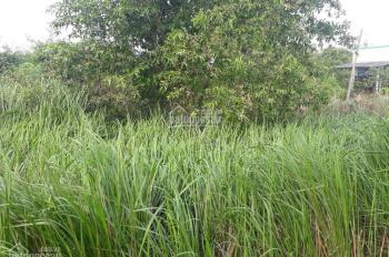 Đất trồng cây ở Đa Phước (bao chạy giấy tờ lên thổ)