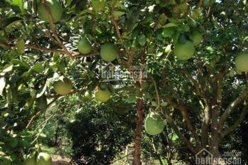 Bán 6000m2 vườn ao, chuồng + nhà tại xã Bảo Quang, Long Khánh, Đồng Nai