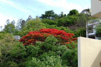 Cần bán gấp đất tại TP Vũng Tàu, cảnh quan tuyệt đẹp. LH chính chủ: 0842814080