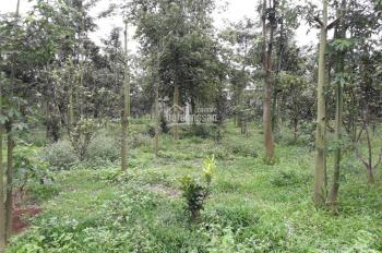 Bán đất thổ vườn xã Sông Xoài, Tx. Phú Mỹ, Bà Rịa Vũng Tàu