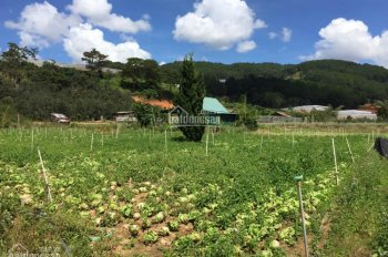 Cho thuê đất 2400m2 làm vườn, ươm giống