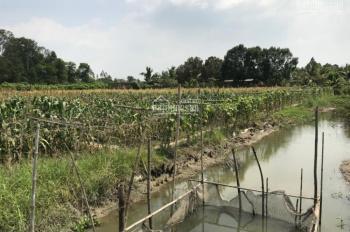 Bán đất ở cặp Lộ tẻ Hùng Cường, Vĩnh Trạch, Thoại Sơn. LH: 0946797511