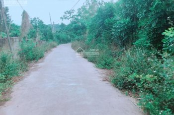 Bán vườn cây sầu riêng chính chủ, giá 800 nghìn/m2, thu hoạch 1 tỷ/mùa, SHR, LH 0901114539