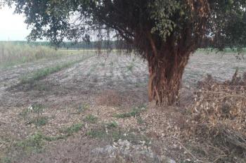 Tuy không được nhộn nhịp nhưng đất ngoài ở ra rất màu mở, trồng trọt, chăn nuôi rất tốt