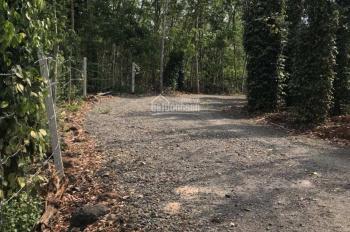 Cần bán miếng đất thổ vườn, DT 1.6 ha, đường Tỉnh lộ 328, xã Bầu Lâm, Xuyên Mộc, Bà Rịa-Vũng Tàu
