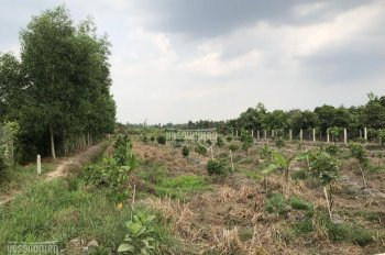 Bán 3600m2 vườn mít, đường Sông Lu, X. Trung An, Củ Chi