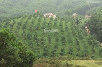 Bán gấp 7800m2 đất trang trại nhà vườn đồi trồng cam tại Suối Ngọc, Tiến Xuân, Thạch Thất