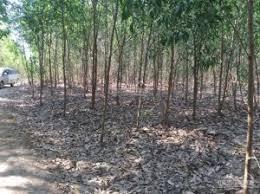 Bán đất xã Xuân Hiệp, Xuân Lộc, Đồng Nai