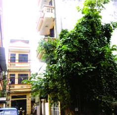 Nhà anh còn 1 phòng tốt giá rẻ 1.2tr, 15m2, P Tân Mai, nhà 5T giờ giấc thoải mái MTG