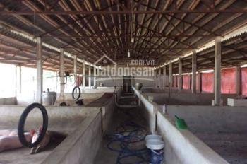 Cần bán gấp trang trại tại xã Đông Sơn, TP. Tam Điệp, Ninh Bình