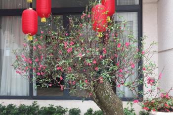 Chính chủ bán gấp nhà vườn Pandora Triều Khúc, Thanh Xuân, 150m2, tiện ở, cho thuê VP, 0934.815.789