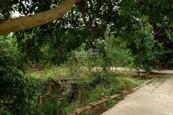 Cần bán nhà vườn 2800m2 tại Cổ Đông, Sơn Tây, giá 1,3 triệu/m2