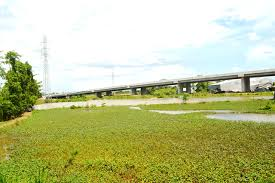 Đất mặt tiền đường QL 80, xã Bình Thành, Lấp Vò, Đồng Tháp