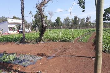 Chính chủ bán gấp 2,3ha đất nông nghiệp, trang trại VAC, huyện Cẩm Mỹ, tỉnh Đồng Nai