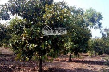Chính chủ bán vườn trái cây Long Khánh, 4216m2, thích hợp nghỉ dưỡng cuối tuần