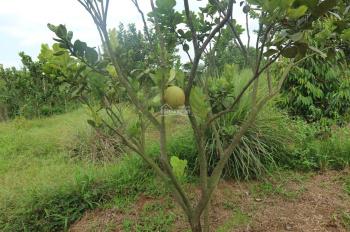 Bán 1,1 ha vườn cây ăn trái, nghỉ dưỡng, gần hồ du lịch sinh thái Hàng Gòn, Long Khánh