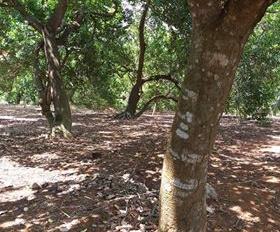 Cần bán hơn 1 ha đất đỏ bazan, mặt tiền đường nhựa, hơn 100m mặt tiền, giá 2 tỷ