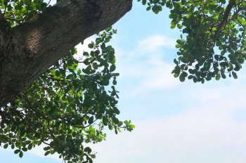 Bán 18000m2 KDL sinh thái nghỉ dưỡng hồ Gia Ui (sổ hồng đất trồng cây) xã Xuân Tâm, huyện Xuân Lộc