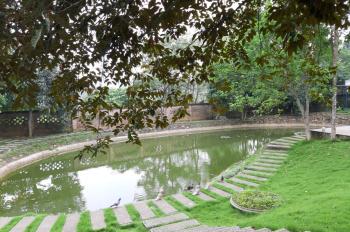 Khuôn viên nhà vườn hoàn thiện DT 3000m2 Yên Bài - Ba Vì - Hà Nội đang cần bán gấp