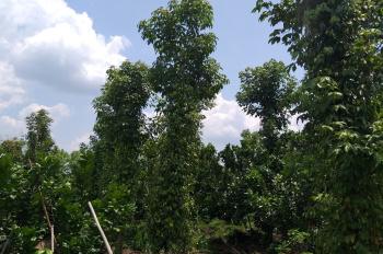 Cần bán 1 mẫu đất ở huyện Tân Phú, tỉnh Đồng Nai, gần khu công nghiệp Tân Phú