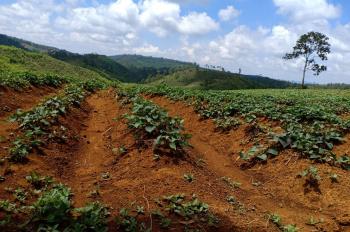 Chính chủ cần bán 20ha trang trại đang trồng sầu riêng & bưởi tại TT Quảng Sơn, Dắk GLong, Đắk Nông