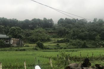 Bán đất trang trại nhà vườn tại Tiến Xuân, Thạch Thất, HN. Giá 300 triệu/sào