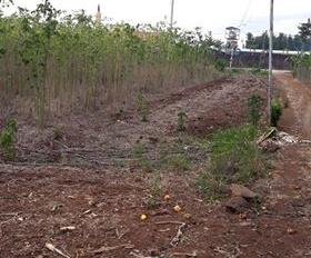 Cần bán hơn 4 sào đất ở giá bán 1.35 tỷ, liên hệ 0902192579 gặp Thoại